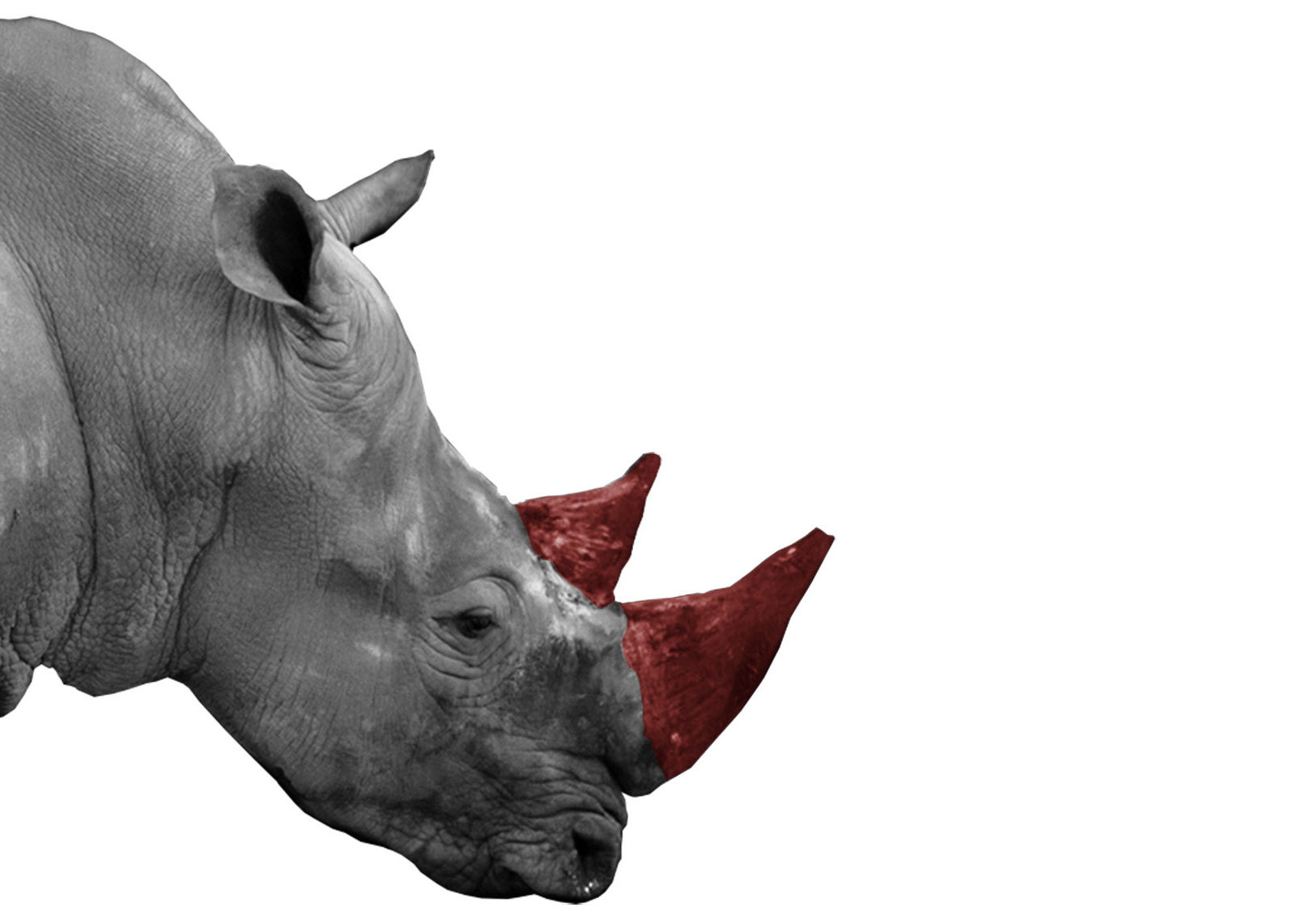 Can property rights and trade save Africa's rhino?