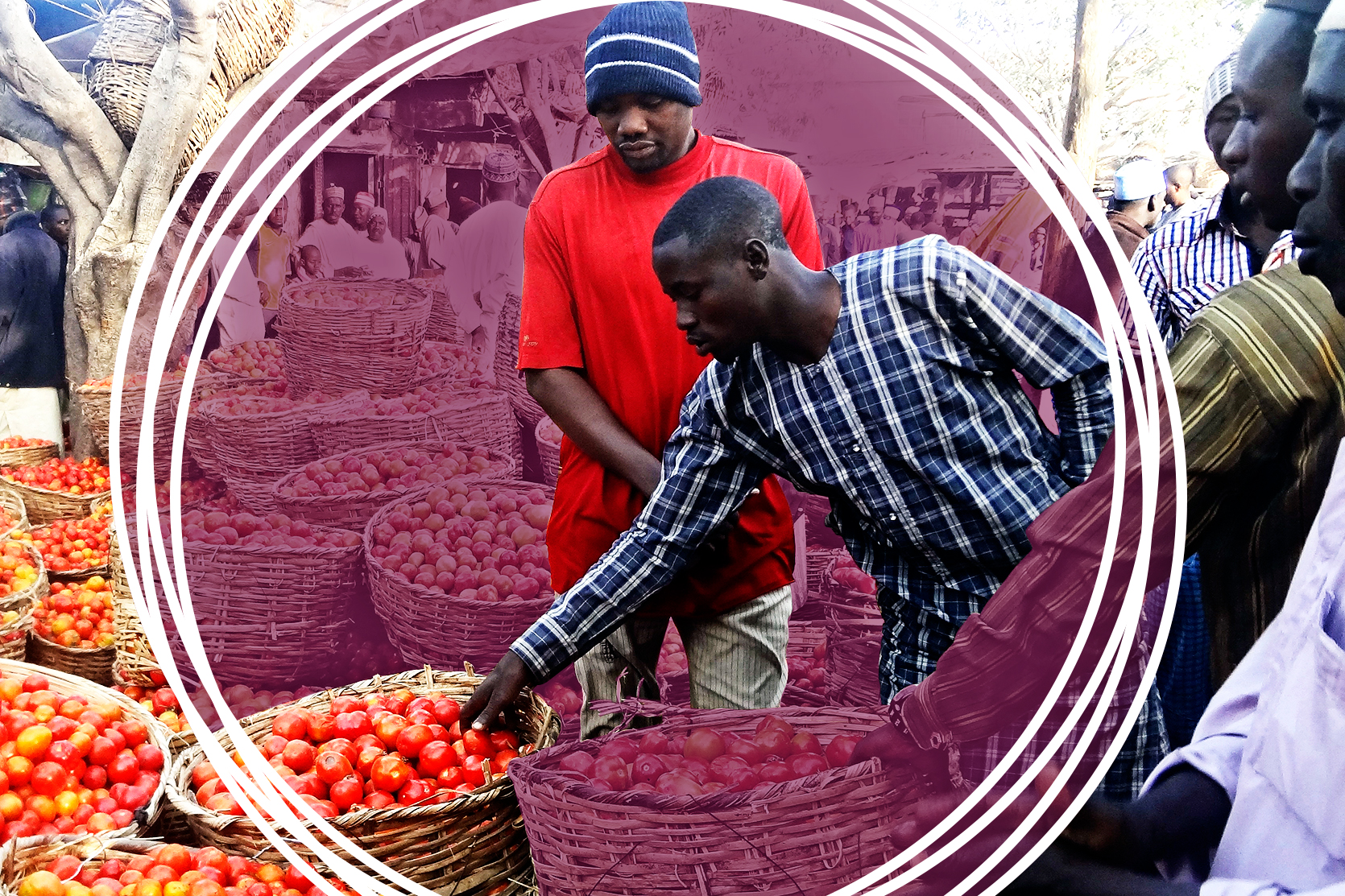 COVID-19: A virus eliminating jobs, livelihoods