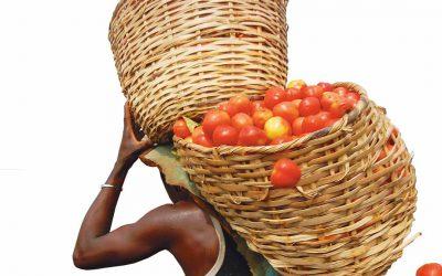 Nourishing Africa's urban transition