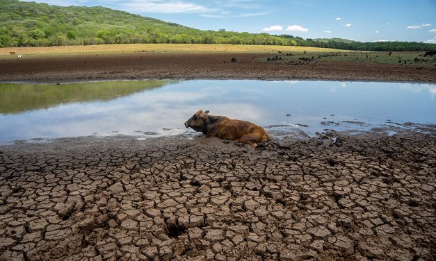 Climate finance and COP26 – A key issue for Africa